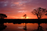 Shadows  at  dawn , by the fish  pond.