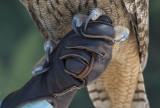 Owl Talons 8925