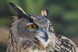 Owl 8914