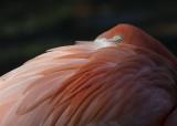 Flamingo Eye 8934