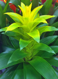 Plant R.jpg