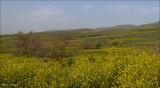 Golan slopes nature reserve, Israel