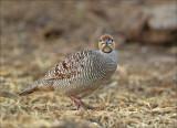 birds_oman_2013