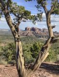 18-03 Tree 1.jpg