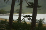 Knoydart trees.jpg