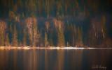 Evening light3.jpg