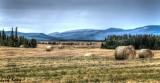 Hay fields2.jpg