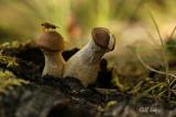 Garden fungi.jpg