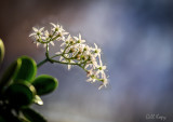 Jade flower2