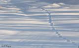 Shadows and tracks
