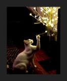 cat_people