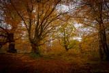 Herbst im Halloh