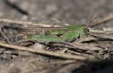 Recent Bug Images