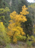 Autumn in the Black Hills - South Dakota