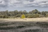 Baie de Somme-092.jpg