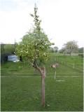 Perenboom inmiddels 74 jaar