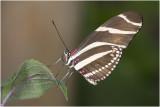 GALLERY Tropische vlinders