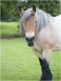 Galerij Paarden en ezels - Horses and Donkeys