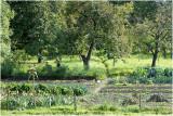 Groente- of moestuin -  jardin potager - kitchen garden