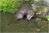 Limburg - zoogdieren - mammals - mammifères