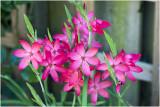 GALLERY onze tuin - our garden