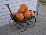 A load of pumpkins