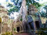Ta Prohm Temple, Cambodia