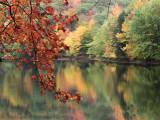 Couleurs Automnale / Fall colors