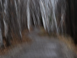 Forest Abstract_Abstrait forestier