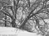 Nature en Noir & Blanc_Nature in Black & White