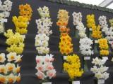 RHS Flower Show, Cardiff 2017