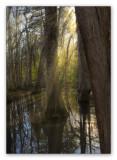 Sundown on the swamp