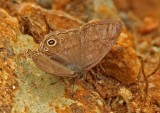 Butterfly-Zamora.jpg
