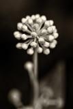 Mondo floreale / Floral world