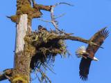 EagleNestRckprtStPrk071617.jpg