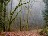 Path112617.jpg