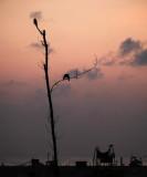 Marina beach Chennai, India_DSF9076.jpg