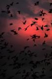 flight of the pigeons_DSF9647.jpg