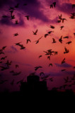 flight of the pigeons_DSF9647.jpg