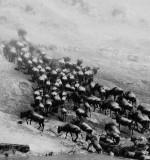 wildebeast_crossing masai_mara_DSCF3632a.jpg