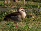 birds_of_masai_mara