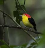 Mainland Ecuador (2018)