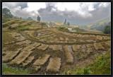 Rice Fields. Yuanyang.