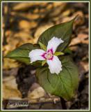 Pennsylvania  plant life