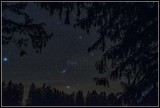 Orion among Spruce trees