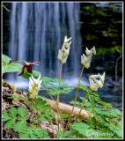 Campbell Run falls with Dutchmens Breeches