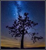 Lone Pine & Milkyway