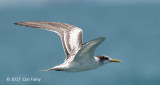 Tern, Swift @ Straits of Singapore
