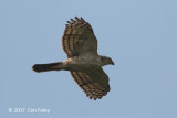 Sparrowhawk, Japanese @ Henderson Waves