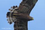 Eagle, Philippine Serpent @ Subic